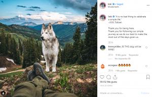Loki-Perros-En-Instagram-BrandMe