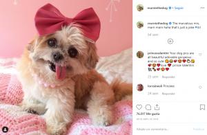 Perros-En-Instagram-BrandMe