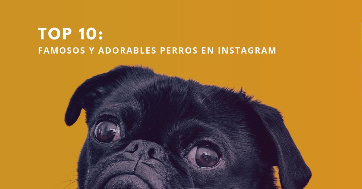 Top-10-Famosos-Y-Adorables-Perros-En-Instagram-BrandMe