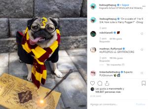 itsdougthepug-Perros-En-Instagram-BrandMe