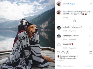 wat.ki-Perros-En-Instagram-BrandMe